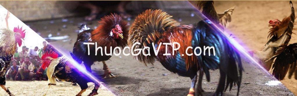 thuoc-ga-da-vip-1024x334